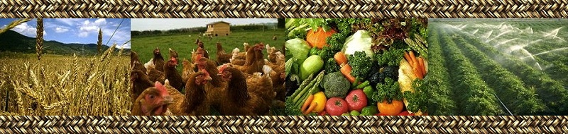 agribusiness forum welcome to our new web page